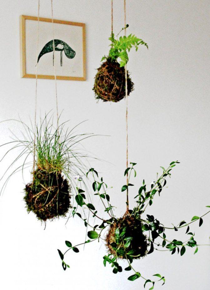 groenplanten4